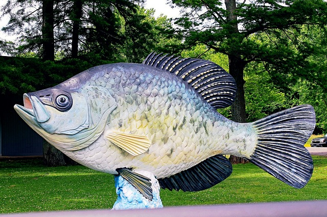 Why Are Crappie Rods So Long?