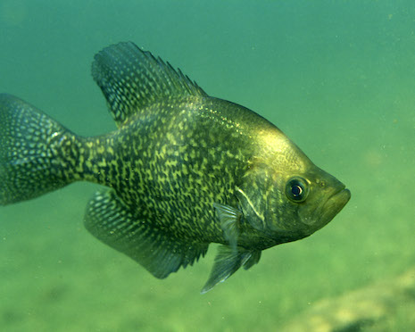 How Do You Use A Crappie Jig
