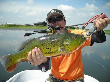 Best Frog Rod For The Money