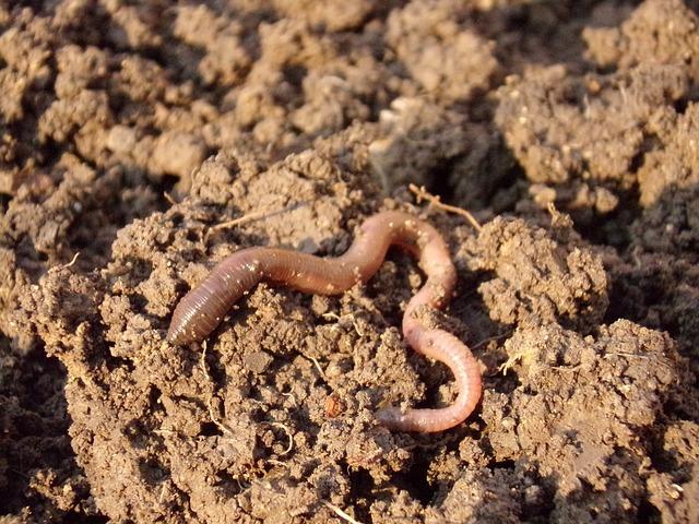 earthworm bait for bluegill
