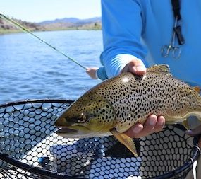 Best Bait For Brown Trout In Rivers