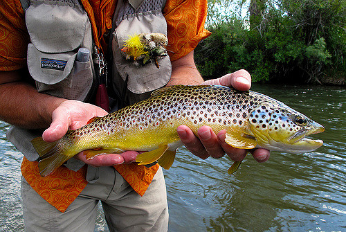 brown trout red rock river