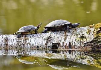 How To Avoid Catching Turtles While Fishing