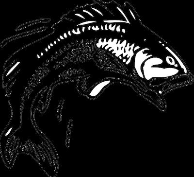 jumping bass fish