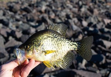 what size hook for crappie is best