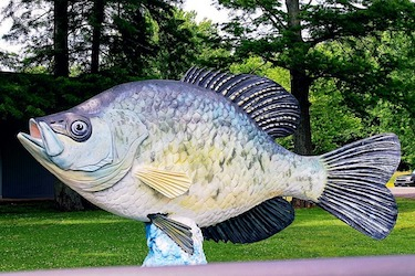 how fast do crappie reproduce