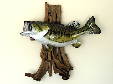 mounted largemouth bass-fish