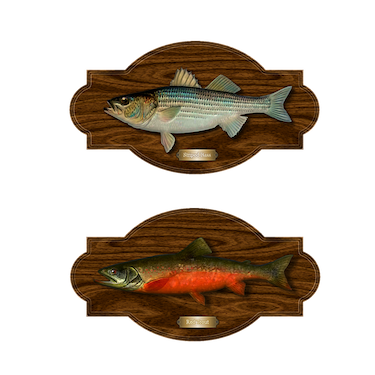mounted trout fish