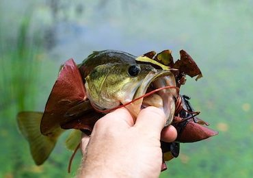 Best Shimano Spinning Reel for Bass